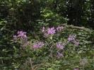 Overgrown Admirals Gardens 10