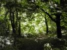 Overgrown Admirals Gardens 12