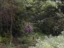 Overgrown Admirals Gardens 13