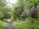 Overgrown Admirals Gardens 14