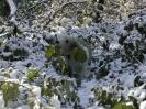 Overgrown Admirals Gardens 6