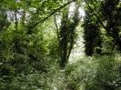 Overgrown Admirals Gardens 8