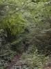 Overgrown Admirals Gardens 9